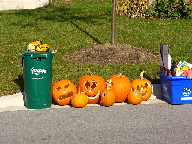 Pumpkins_after_Halloween_pd